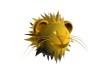 Maigrir grâce à votre horoscope lion